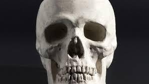 types of human skull shapes synonym