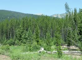 Montana forest images Montana deq gt energy gt climatechange gt naturalresources gt forestry gif
