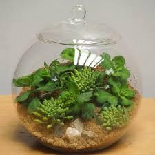 diameter u003d 20cm 6pcs pack big size transparent glass terrarium