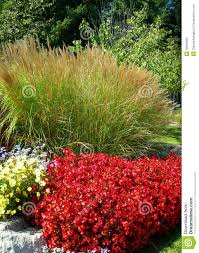 ornamental green grass and flower beds stock photo image