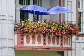 geranien balkon bild balkon mit geranien 475016 bilder und pflanzen