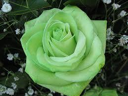 green roses wedding flowers green flowers