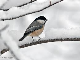 Magpie Birds In Backyards Backyard Bird List Northern Virginia Suburbs