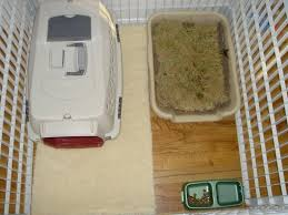 crate training puppy and small dog crate training set up kc dog guy