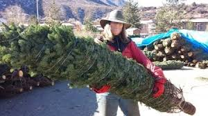 tree sale lot gift of your time this season