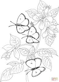 three butterflies coloring page free printable coloring pages