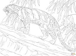 clouded leopard standing on tree coloring page free printable