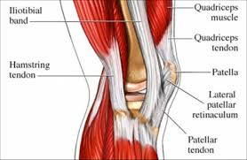 Anatomy Of Shoulder Muscles And Tendons Fascia Bones And Muscles U2013 Beinghuman