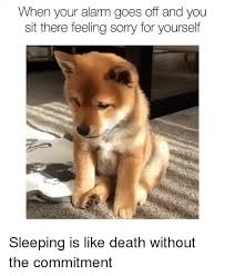 Sorry Memes - 25 best memes about feeling sorry for yourself feeling sorry