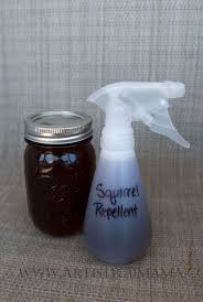 best 25 squirrel repellant ideas on pinterest a squirrel