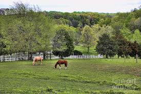 Tennessee landscapes images Tennessee landscape i photograph by chuck kuhn jpg