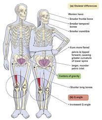 Anatomy Of Human Body Bones Human Body Female Bone Woman Human Body Diagram Anatomy Chart
