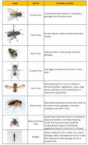 different types on flies commonly found in homes visual ly