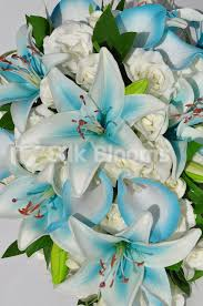 blue lilies shop artificial aqua blue and calla bridal bouquet w