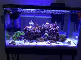 current usa orbit marine aquarium led light help current usa orbit marine led in 10g aquarium advice