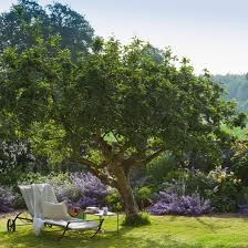 albero giardino alberi da giardino garden ceggia ve