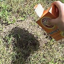 How To Get Rid Of Mosquitoes In Backyard by How To Get Rid Of Ant Hills Top 10 Best Ways To Destroy An Ant