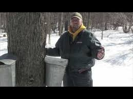 Backyard Maple Syrup by Bill And Dave U0027s Backyard Maple Syrup Youtube