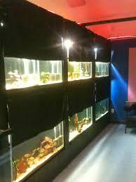 finatics tropical fish fish room has fishes