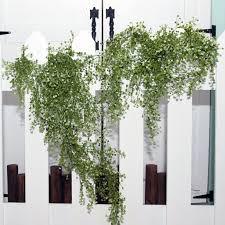 wedding backdrop rental singapore rent hanging plants dreamscaper home party wedding decor