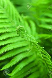 Free Picture Leaf Nature Fern Fern Leaf Nature Background Stock Photo Picture And Royalty