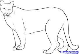 mountain lion drawing images collections hd gadget