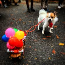 park city dog parade halloween all shook down at ny u0027s tompkins square halloween dog parade nextleg