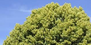 albero giardino alberi per il giardino ecco i cinque pi禮 veloci cose di casa