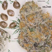 wedding cake genetics wedding crasher seeds by symbiotic genetics will be available