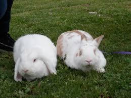 Come Costruire Una Casetta Per Conigli by Inserimenti Quando L U0027integrazione Non è Immediata U2013 Addestrare