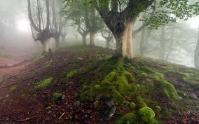 landscapes nature trees forest fog slender slenderman slender