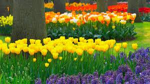 red flower garden 7039316