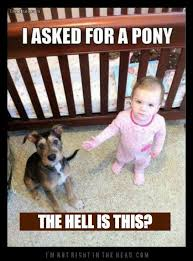 Frowning Dog Meme - the 32 funniest baby memes all in one place baby memes pony and