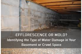 White Mold In Basement Dangerous by Efflorescence Or Mold Identifying The Type Of Water Damage In