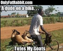Totes Magotes Meme - totes mcgotes totes magotes totes my goats funny pictures