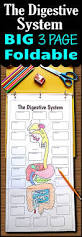 free coloring page digestive system yco4 elipalteco
