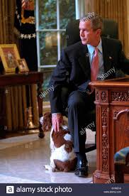 White House Oval Office Desk by U S President George W Bush Pets His Dog Spot While Looking Out