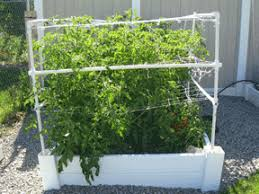 Pvc Pipe Trellis Growing Vertical U2013how To Support Your Plants U2013 My Square Foot Garden