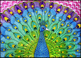 drawn peacock psychedelic pencil and in color drawn peacock