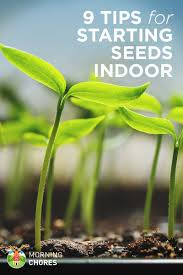 indoor seed starting 9 tips to grow your seedlings properly