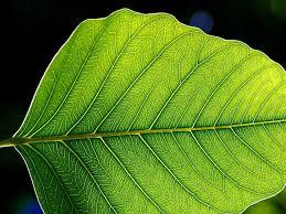 green plants plant