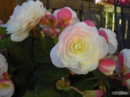 best 25 tuberose wedding flower pictures ideas on pinterest
