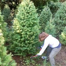 castro valley christmas tree farm 11 photos u0026 30 reviews