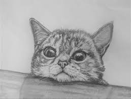 imagenes a lapiz de gatos speed art gato a lapiz youtube