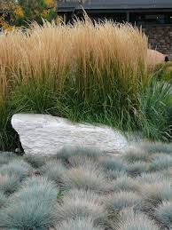 188 best ornamental grasses images on ornamental