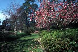 florida memory view of flowering trees at the alfred b maclay