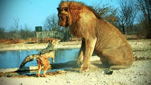 fearless animals animals who are not afraid of anything tnt