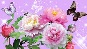 images of flowers pink peony 4236214 1920x1080 all for desktop