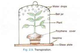 Lab Bench Transpiration Transpiration Lab 9 In College Board Lab Manual Answers