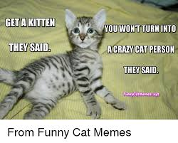 Crazy Cat Memes - get a kitten they said you wont turn into crazy cat person they said